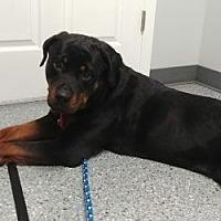Adopt A Pet :: Piper - Lewistown, PA