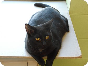 Domestic Mediumhair Cat for adoption in Atchison, Kansas - Ruthie