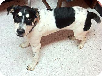 Hound (Unknown Type) Mix Dog for adoption in Lapeer, Michigan - Matt-playful!