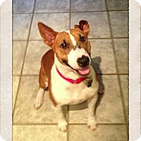 Adopt A Pet :: Lucky Lucy - Sachse, TX