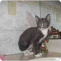 Adopt A Pet :: Tommy - Catasauqua, PA