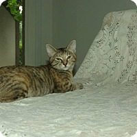Adopt A Pet :: Halo - Ocala, FL
