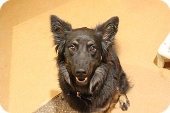 Border Collie Mix Dog for adoption in Chicago, Illinois - Lolli