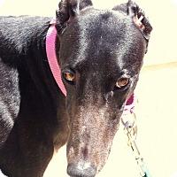 Adopt A Pet :: Maddie (Last 2 Dollars) - Cottonwood, AZ