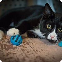 Adopt A Pet :: Tanner - New York, NY