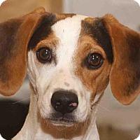 Adopt A Pet :: Spiffy - Rossville, TN