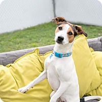 Adopt A Pet :: Tiny - Charlotte, NC