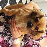 Adopt A Pet :: Missy - Dawson, GA