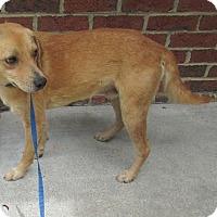 Adopt A Pet :: Buddy - Warrenton, NC