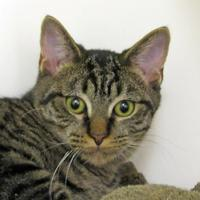 Adopt A Pet :: Victor - Woodstock, IL