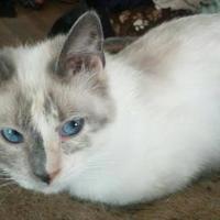 Adopt A Pet :: Aurora - Owatonna, MN