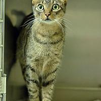 Adopt A Pet :: 10312002 - Brooksville, FL