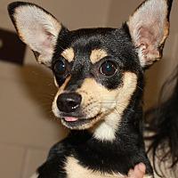 Adopt A Pet :: PEPITO - Clayton, NJ