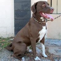 Adopt A Pet :: Jax - Tyler, TX