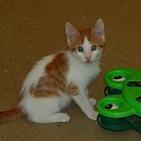 Adopt A Pet :: Oikos (7330) - Tampa, FL