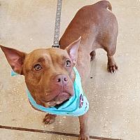 Adopt A Pet :: Carly - Orlando, FL