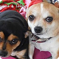 Adopt A Pet :: Thelma and Louise - Arenas Valley, NM