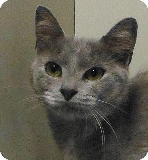 Domestic Shorthair Cat for adoption in Cedartown, Georgia - 27944593