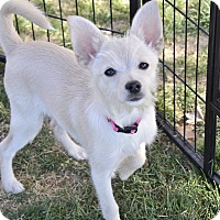 Adopt A Pet :: Piper - Meridian, ID