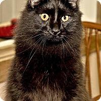 Adopt A Pet :: Mikey - Cashiers, NC