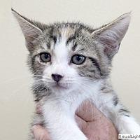 Adopt A Pet :: Cutie - Westchester, CA