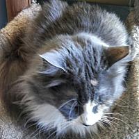 Adopt A Pet :: Betsy - Scottsdale, AZ