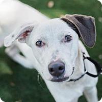 Adopt A Pet :: River - Bradenton, FL