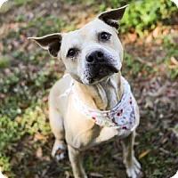 Adopt A Pet :: Pillsbury Biscuit - Lakeland, FL