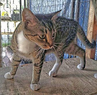 Adopt A Pet :: Gia  - Snow Hill, NC