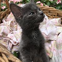 Adopt A Pet :: Elisabeth Van Gogh - Jackson, MS