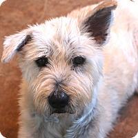 Adopt A Pet :: Lola - Norwalk, CT