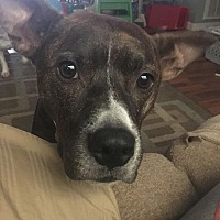 Adopt A Pet :: Ra - Syracuse, NY