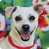 Adopt A Pet :: CHARLIE - Red Bluff, CA