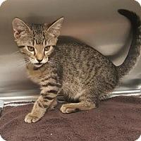 Adopt A Pet :: Nuckles - Americus, GA