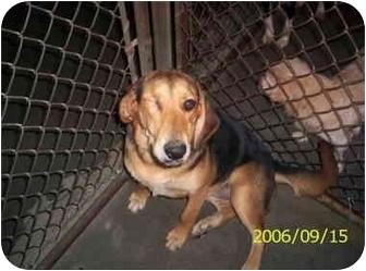 Hound (Unknown Type) Mix Dog for adoption in Raeford, North Carolina - RACHEL