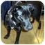 Photo 2 - Labrador Retriever Mix Dog for adoption in Overland Park, Kansas - Honey
