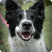 Adopt A Pet :: Bentley - Cheyenne, WY