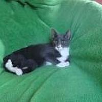Adopt A Pet :: Bentley - Sarasota, FL