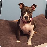 Adopt A Pet :: Cayenne - Walker, LA