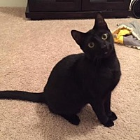 Adopt A Pet :: Jiji (courtest listing) - Baton Rouge, LA