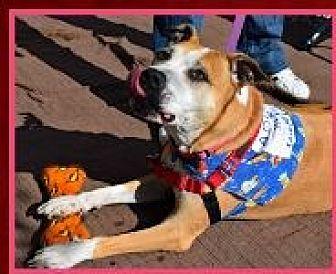 Pit Bull Terrier Mix Dog for adoption in Ogden, Utah - Sophie