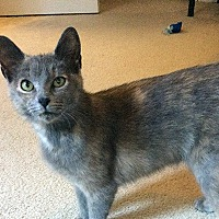 Adopt A Pet :: Tinkerdoodle - Durham, NC