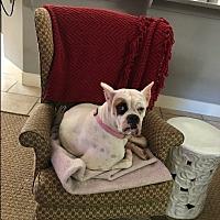 Adopt A Pet :: Armenia - Austin, TX