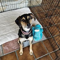 Adopt A Pet :: Minnie - Manhattan, NY