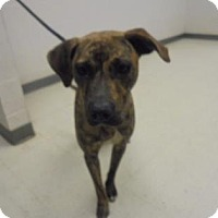 Adopt A Pet :: Margeaux - Lonely Heart - Gulfport, MS