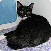 Adopt A Pet :: Mamma Mia - New Kensington, PA