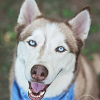 Adopt A Pet :: Malachi - Houston, TX