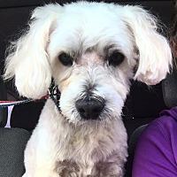 Adopt A Pet :: PI - Rancho Santa Fe, CA