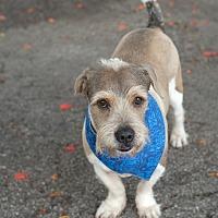 Adopt A Pet :: Dumbo - Key Biscayne, FL