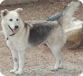 German Shepherd Dog Mix Dog for adoption in Norwalk, Connecticut - Serena - LOVES KIDS